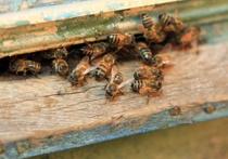 В Подмосковье произошло массовое отравление пчел: виновников наказал суд