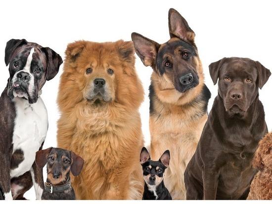 Четвероногий год, или Как приручить собаку